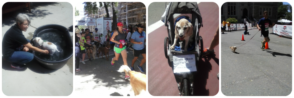 Eukanuba Dog Race Collage