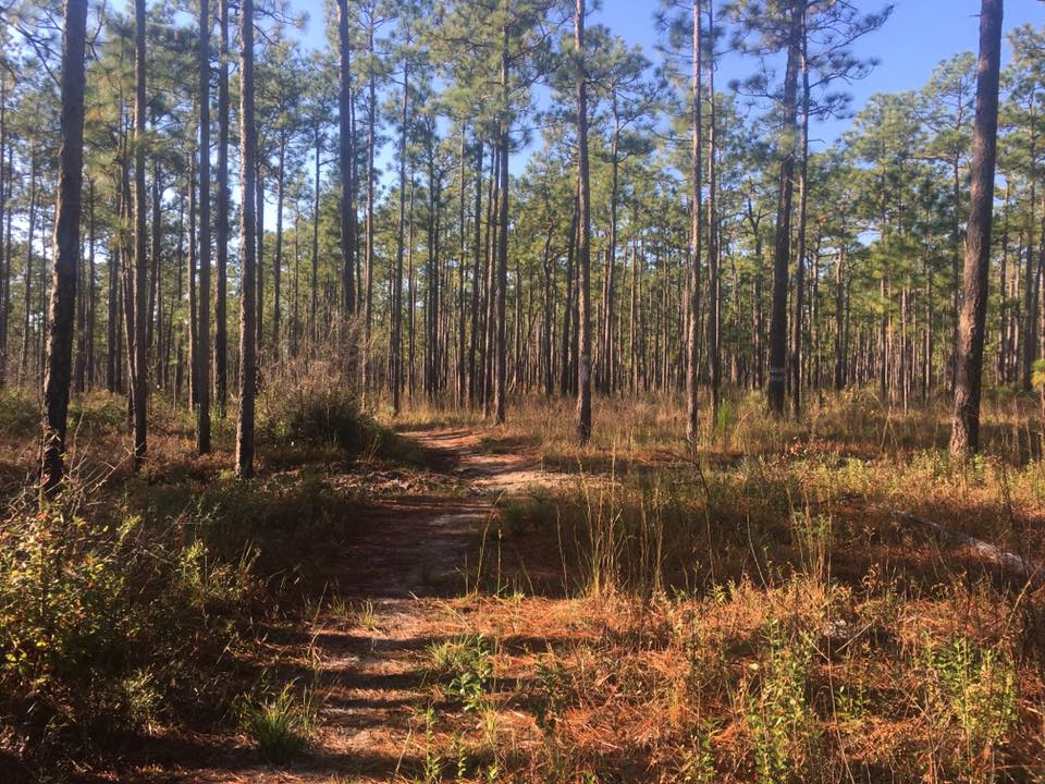 Swamp Fox Ultra