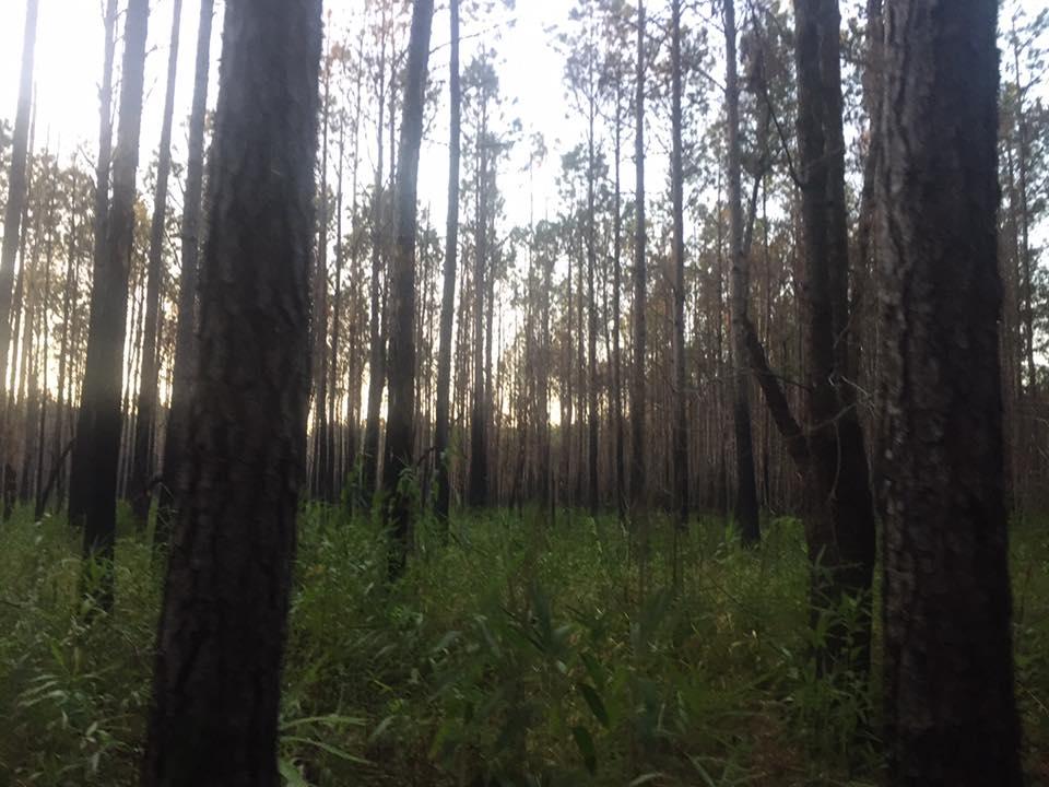 Swamp Fox 3