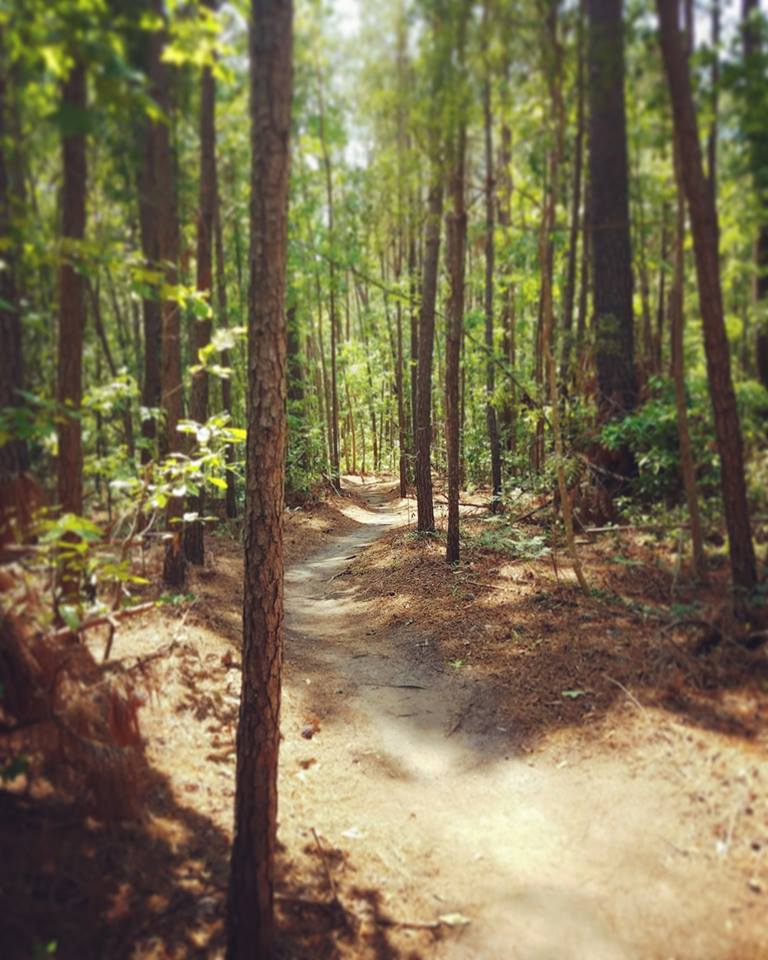 Horry County BIke & Run Park Trail Running in Myrtle Beach - a Complete Guide