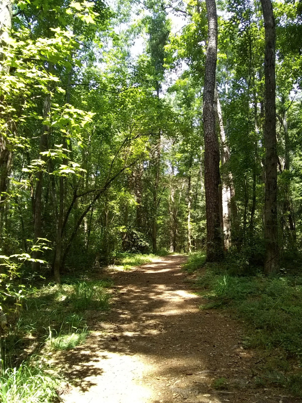 Trail Running in Myrtle Beach Cox Ferry Lake Recreational Trail