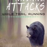 How to Avoid Wild Animal Attacks While Trail Running