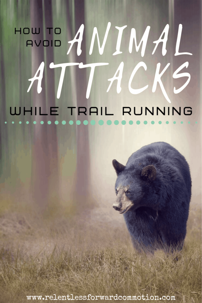 How to Avoid Wild Animal Attacks While Trail Running.