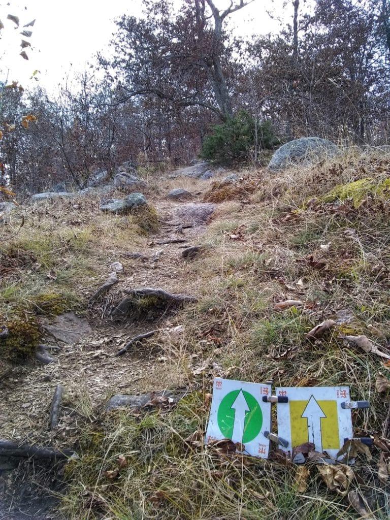 Ragnar Trail Relay Wawayanda Lake - Yellow & Green loop trail markers