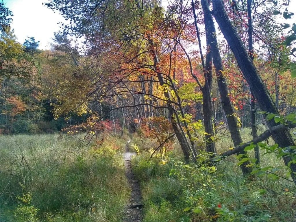 Ragnar Trail Relay Wawayanda Lake - Yellow Loop Trail