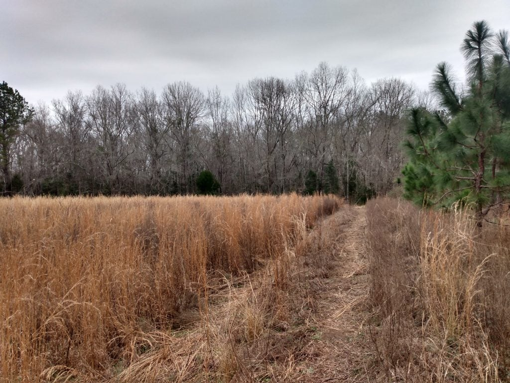 Field at Biggin Creek Mountain Bike Trail