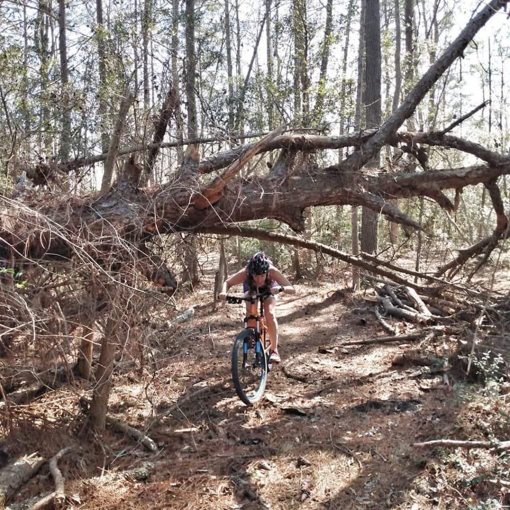 Mountain biking under a fallen tree
